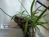 Orchidárium – novépřírůstky